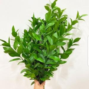 Harga daun ruscus fresh flower bunga potong segar tangerang florist | HARGALOKA.COM