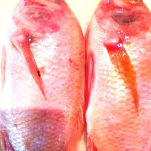 Harga ikan nila ikan segar pedagang sayur pasar moderen | HARGALOKA.COM