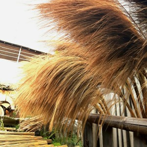 Harga pampas grass tanpa bulu | HARGALOKA.COM
