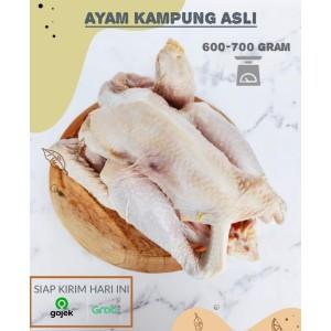 Harga ayam kampung 1 ekor utuh segar sehat bersih dan halal khusus | HARGALOKA.COM