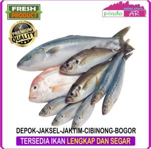 Harga ikan segar depok   jakarta selatan   jakarta timur   cibinong   | HARGALOKA.COM