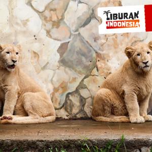Harga tiket masuk lembang park zoo bandung   tiket | HARGALOKA.COM
