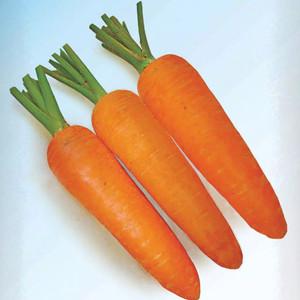 Harga biji benih bibit wortel 100 butir | HARGALOKA.COM