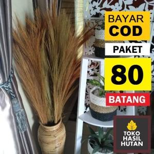 Harga paket 80 batang pampas rayung kering glagah toko hasil hutan   paket 80 | HARGALOKA.COM