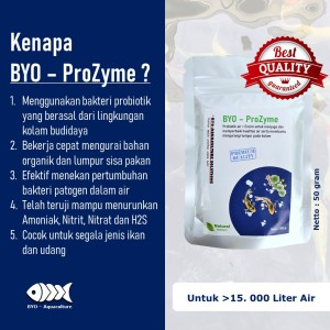 Info Bakteri Probiotik Untuk Kolam Ikan Koi Fishco Pond Botol 40gr Katalog.or.id