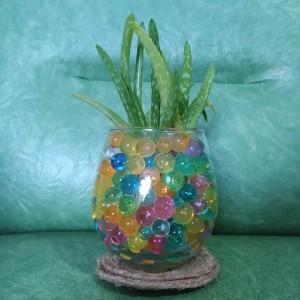 Harga tanaman hias indoor hydrogel   ld 3 | HARGALOKA.COM
