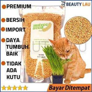 Info Biji Koaci Repack Cemilan Hamster Katalog.or.id