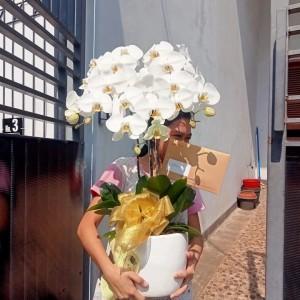 Harga bunga | HARGALOKA.COM
