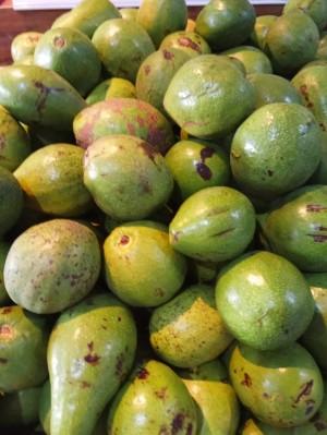 Harga avocado   HARGALOKA.COM