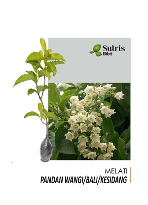 Harga tanaman hias bunga melati pandan | HARGALOKA.COM