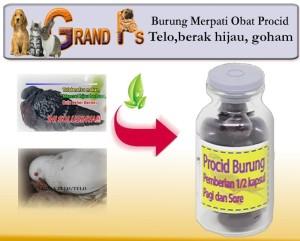 Harga burung merpati obat procid telo berak hijau goham | HARGALOKA.COM