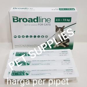 Info Kucing Himalaya Katalog.or.id
