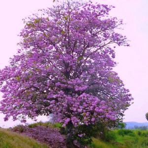Harga Gbng 06 Aplikasi Bunga Korea Putik Dahlia Mix Warna Per Lusin Katalog.or.id