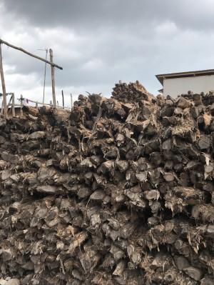 Harga kayu dolken gelam murah free ongkir   HARGALOKA.COM