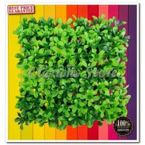 Katalog Rumput Plastik Rumput Palsu Rumput Hiasan Untuk Aquarium Aquaria Katalog.or.id