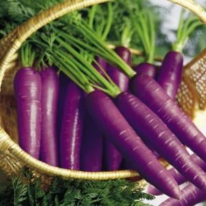 Harga bibit benih biji wortel ungu   carrot cosmic purple isi 50 | HARGALOKA.COM