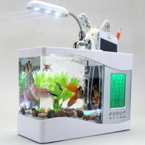 24 Harga Aquarium Mini Ikan Hias Ikan Cupang Murah Terbaru 2020 Katalog Or Id