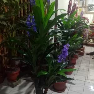 Harga pandan bali bunga plastik bunga | HARGALOKA.COM
