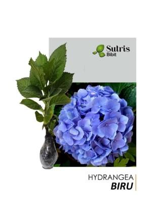 Harga paling laris bibit tanaman bibit tanaman hydrangea biru | HARGALOKA.COM