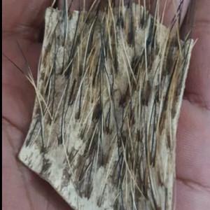 Harga lulang kebo landoh kulit kerbau landoh barang langka ajimat | HARGALOKA.COM