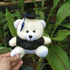 Harga boneka wisuda mini hadiah wisuda   | HARGALOKA.COM
