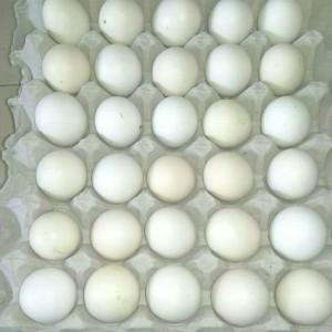 Katalog Vitaplex Vitamin Obat Ayam Isi 50 Butir Katalog.or.id