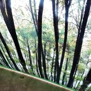 Harga fiber plastik penutup pagar motif hutan   HARGALOKA.COM