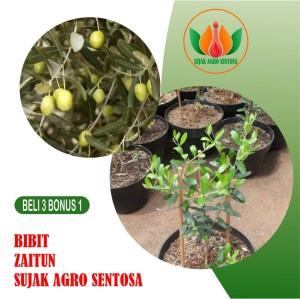 Harga bibit buah tanaman | HARGALOKA.COM