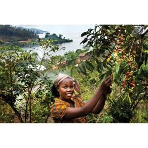 Harga mokhabika specialty coffee dr congo arabica kivu 200 | HARGALOKA.COM