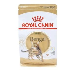 Katalog Kucing Bengal Katalog.or.id