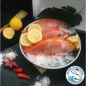 Info Ikan Nila Katalog.or.id