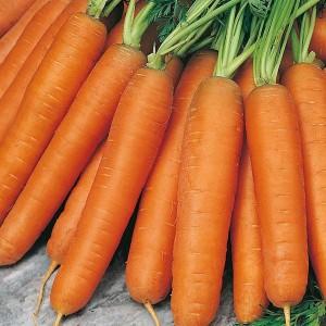 Harga benih bibit biji   wortel carrot nantes 5 seeds   | HARGALOKA.COM