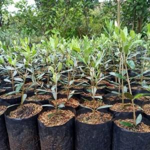 Harga bibit tanaman | HARGALOKA.COM