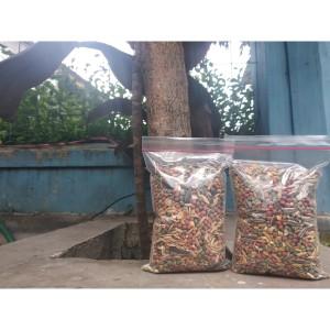 Info Makanan Hamster Repak Golden Hamster Katalog.or.id