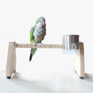Katalog Glodok Batok Rumah Sarang Bertelur Burung Lovebird Kenari Ciblek Pleci Katalog.or.id