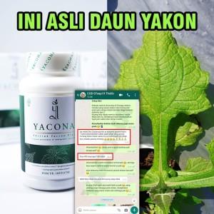 Harga atasi keluhan gula darah tinggi herbal premium yacona 120   HARGALOKA.COM