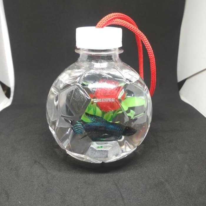 Jual Aquarium Ikan Cupang Botol Plastik Hiasan Aquarium Bola Kota Depok Banafscape Aquatic Tokopedia